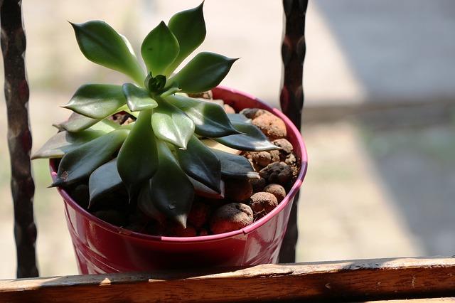 Zelená rastlina v kvetináči.jpg