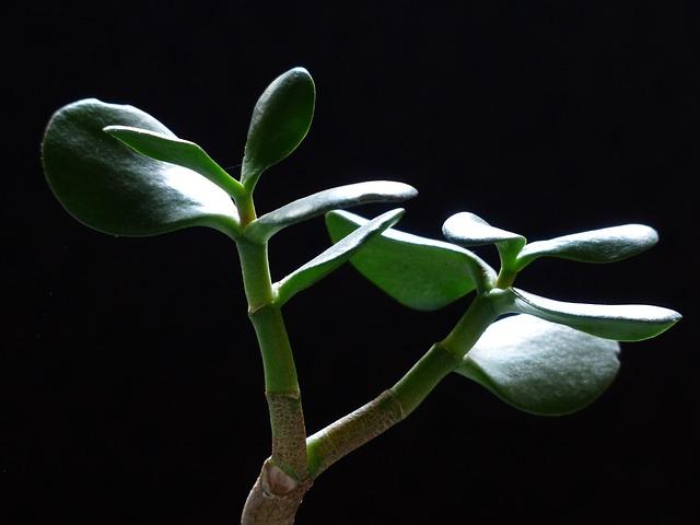 Zelená rastlina v tme.jpg